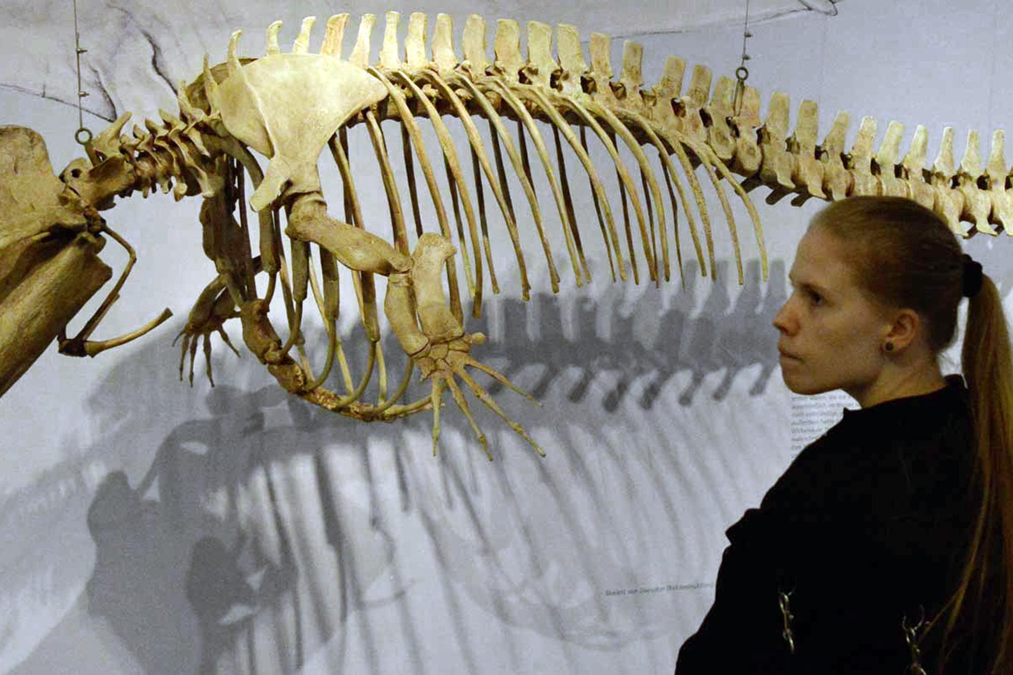 Naturkundemuseum Münster 2014